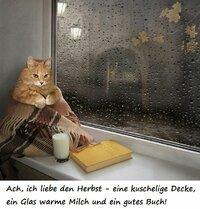 78_Katze im Herbst.jpg