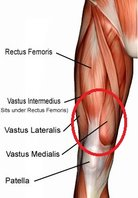 Quadriceps Muscles.jpg